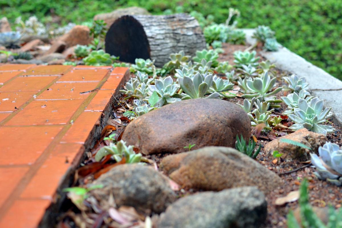 Suculentas no jardim